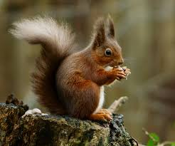 When Do Squirrels Have Babies?