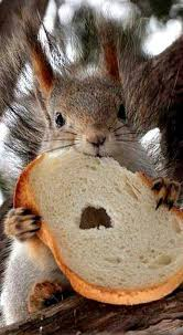 Can Squirrels Eat Bread? What You Need to Know - Squirrel Arena