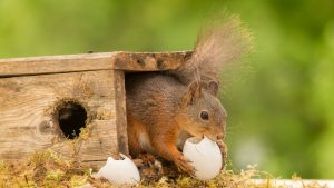 Do Squirrels Eat Bird Eggs
