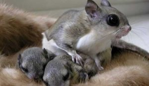 How Many Babies Do Squirrels Have