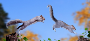 Why Do Squirrels Chase Each Other